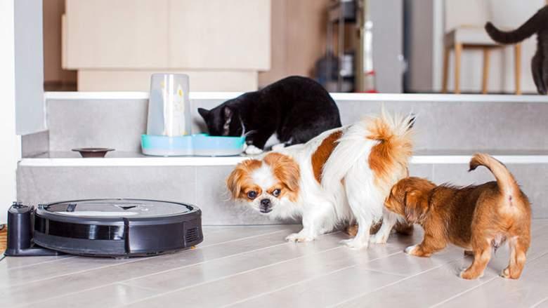 robotdammsugare med husdjur